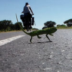 Sometimes it's best to get on with your life rather than worry about what might happen....An amazing photo I managed to capture of a chameleon sharing the road