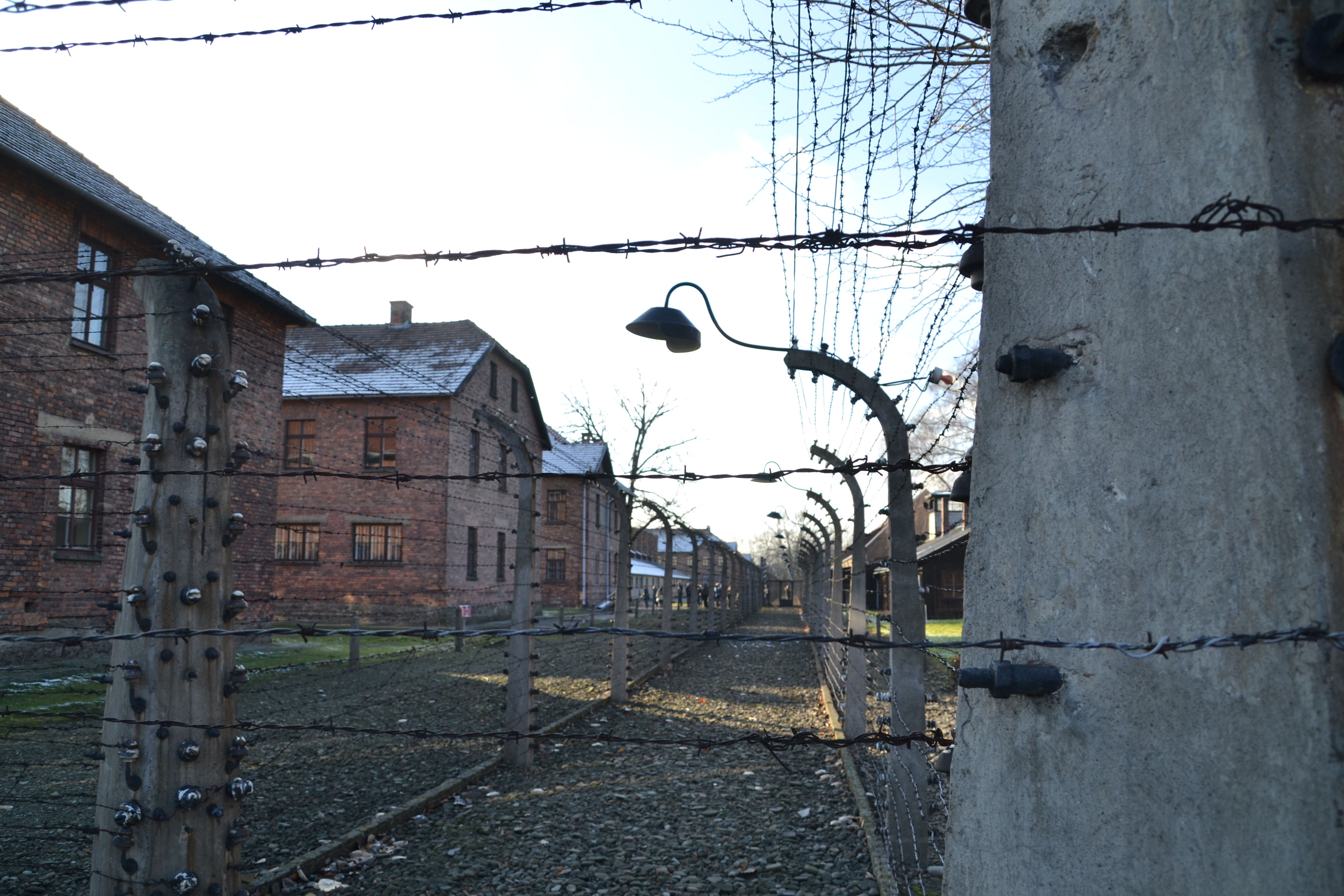 barbed wire auschwitz