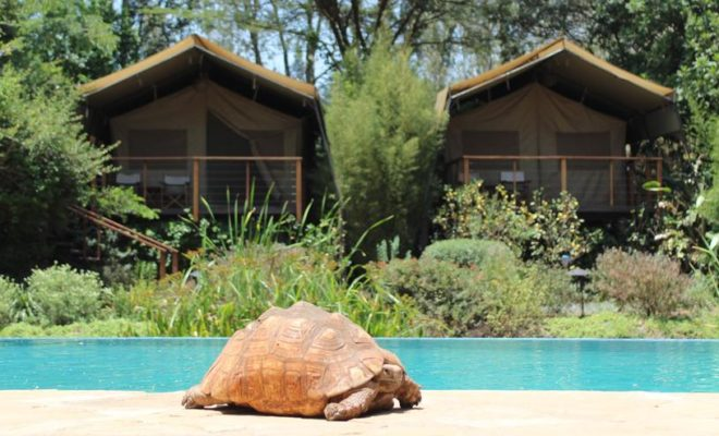Wildbeest camp in Nairobi