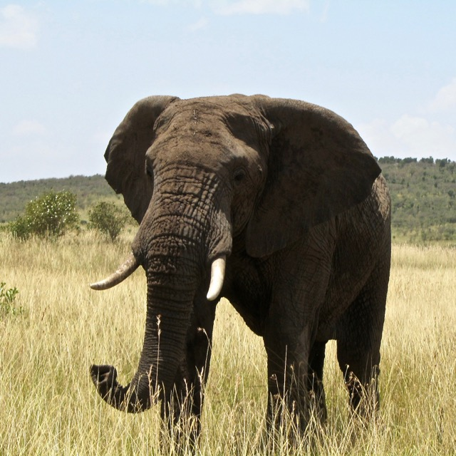 elephant-on-private-safari