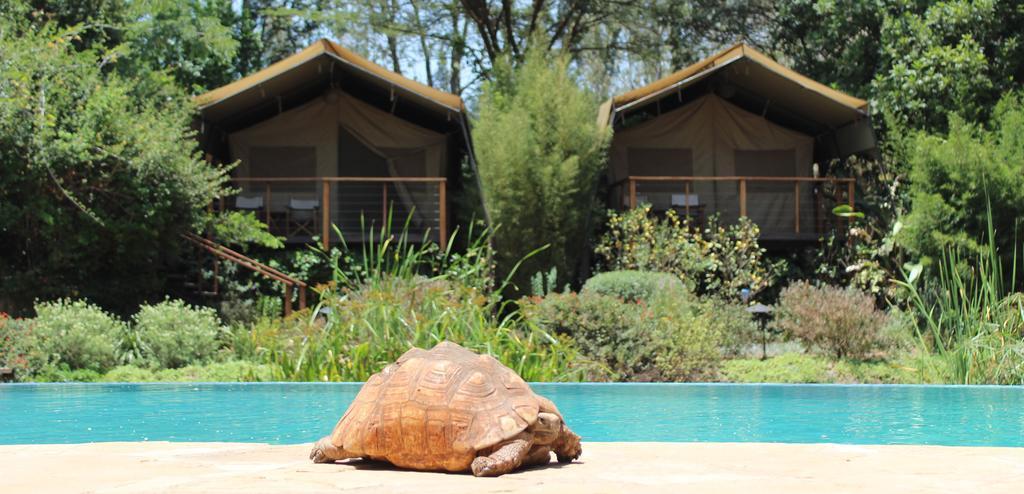 Wildbeest camp in Nairobi