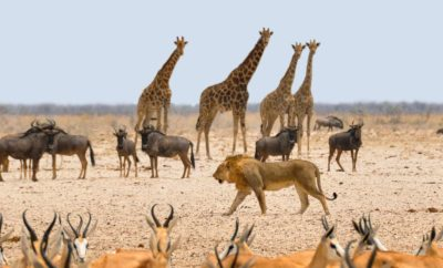 The best places to see wildlife in Africa